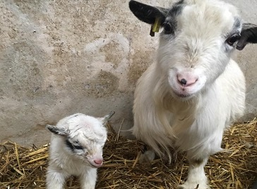 Brimham Rocks Adventure farm in Harrogate