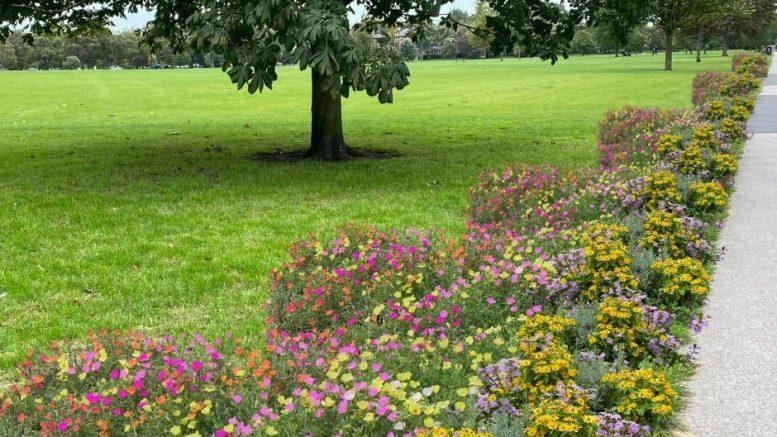 Can Harrogate's Stray Bee-friendly?